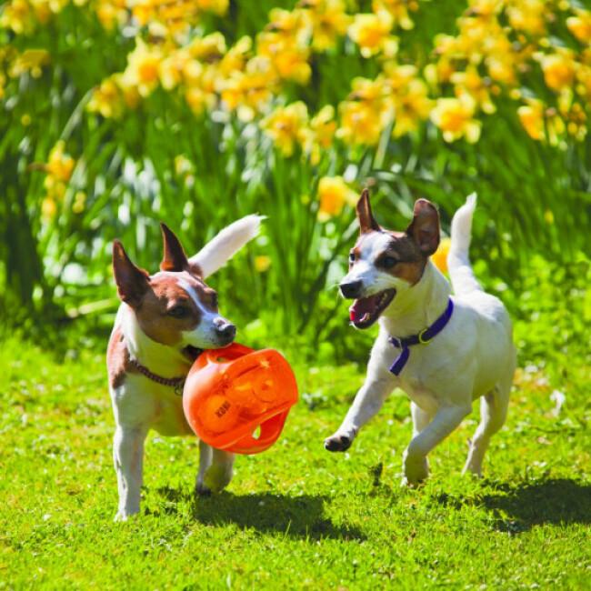 Jeu KONG Jumbler Ball en élastomère pour chien