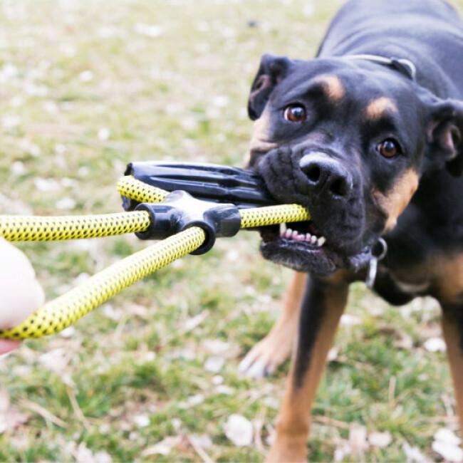 Jouet à tirer avec corde pour chien KONG Jaxx Infinity Tug