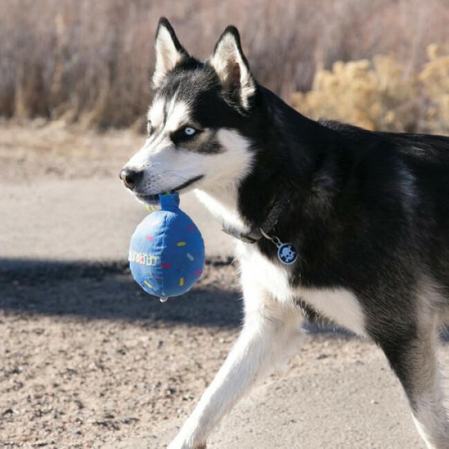 Jouet ballon peluche avec corde pour chien KONG Birthday