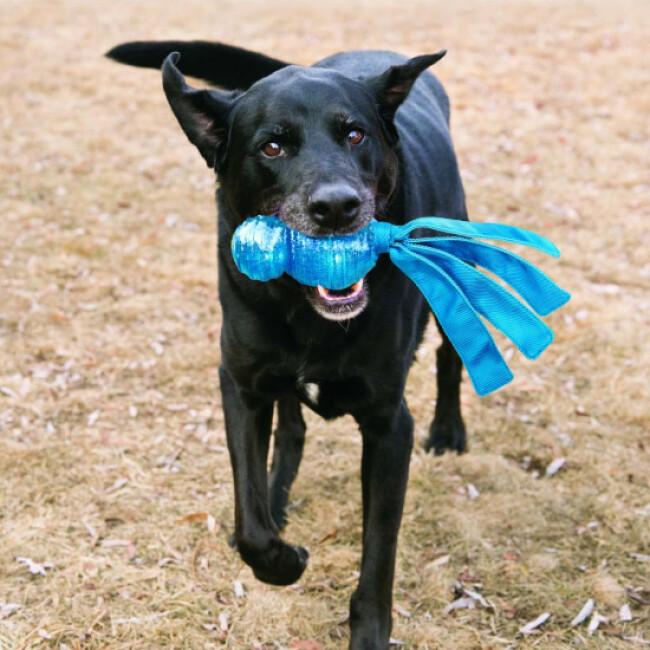 Jouet couineur à lancer pour chien KONG Wubba Comet