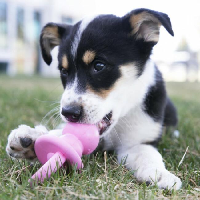 Jouet de dentition pour chiot KONG Puppy Binkie