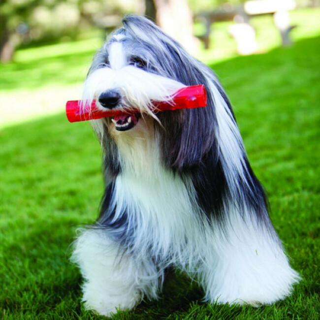 Jouet en élastomère KONG Squeezz pour chien joueur et mâchouilleur