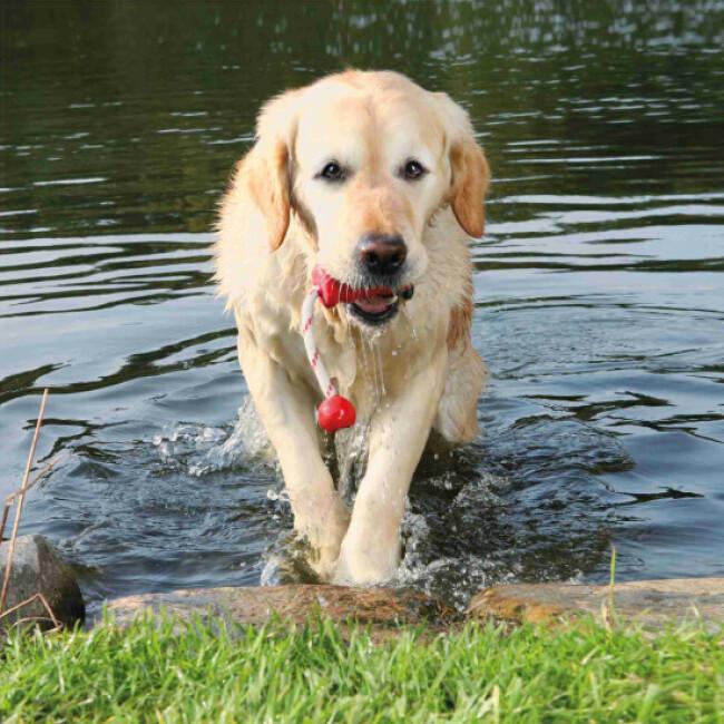Jouet lanceur Aqua Toy Fun Trixie pour chien