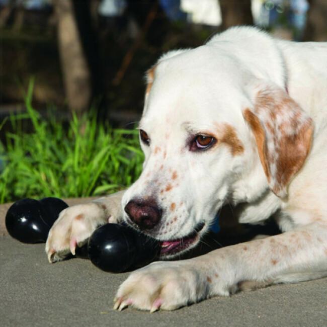 Jouet os à garnir pour chien KONG Extreme Goodie Bone