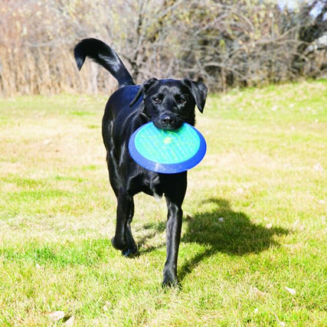 Jouet pour chien KONG Cruncheez Flyer 21,5 cm