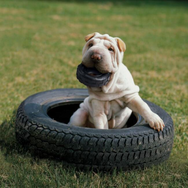 Jouet résistant pour chien KONG Traxx Extreme