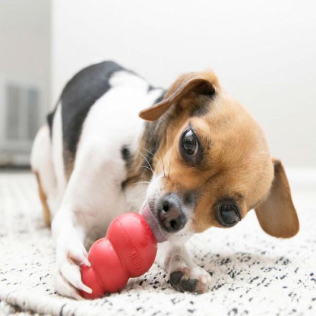 KONG jeu multi-boule ultra résistant pour chien