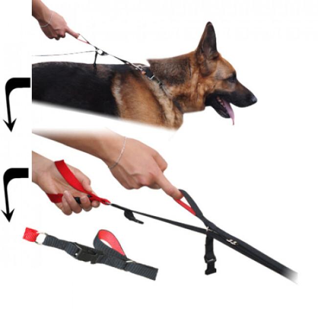 Laisse 2 positions Cartahu™ à déploiement de sangle pour la conduite de chien