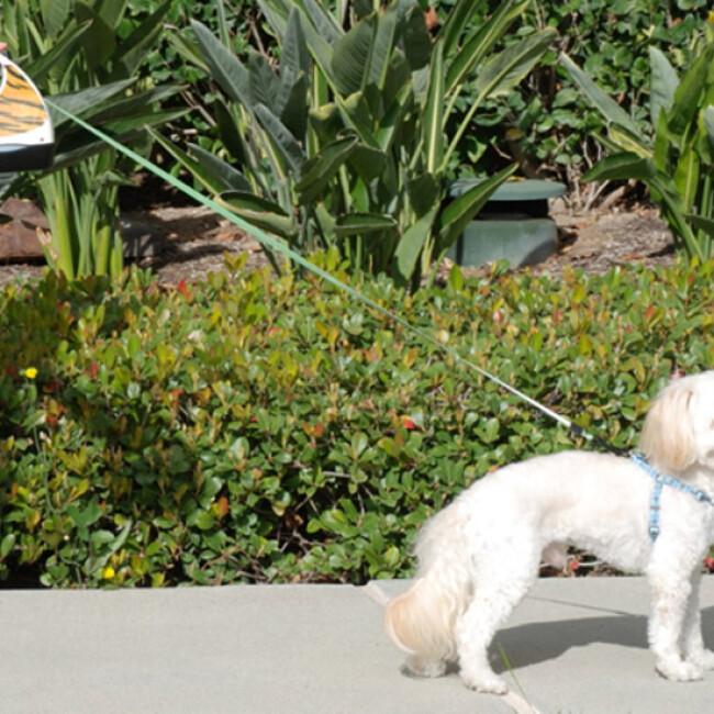 Laisse à enrouleur WaterWalker pour chien et chat
