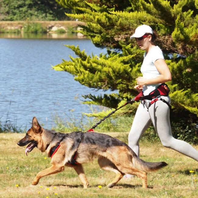 Laisse amortisseur canicross Crolargue pour 1 chien de moyenne ou grande taille