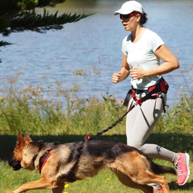 Laisse amortisseur Canicross Original™ pour chien de moyenne et grande taille