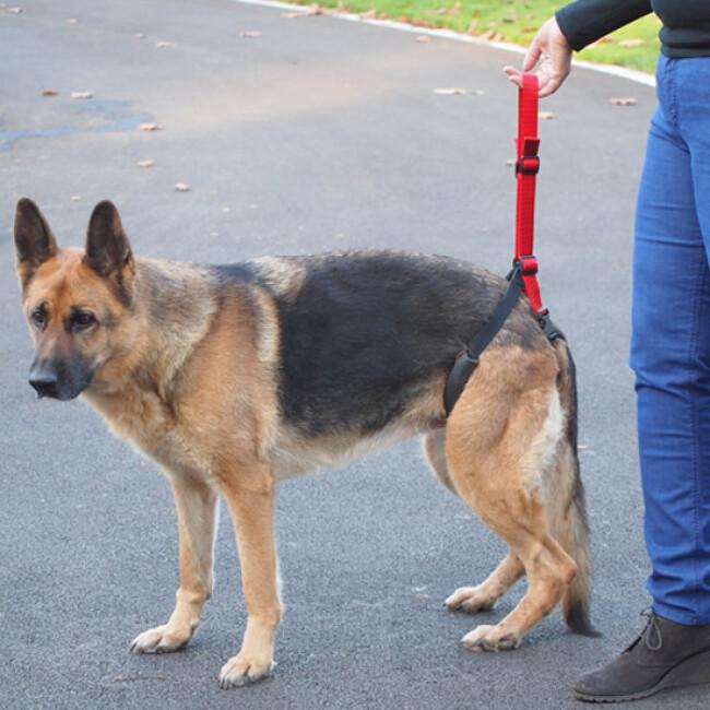 Laisse baudrier Updog™ soutien à la mobilité du chien