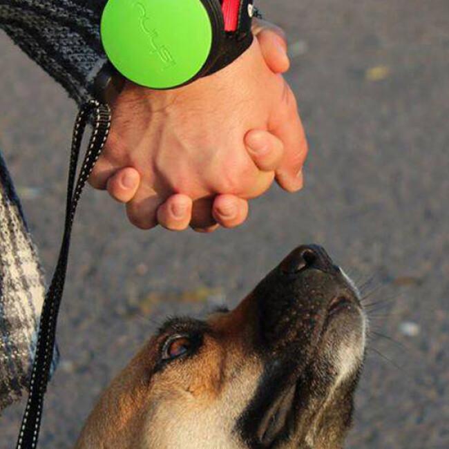 Laisse bracelet à enrouleur Lishinu  pour chien et chat