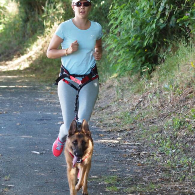 Laisse pour canicross avec amortisseur Tubucross pour chien de moyenne et grande taille