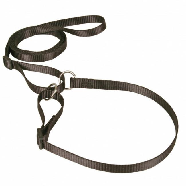 Laisse collier nylon réglable pour chien