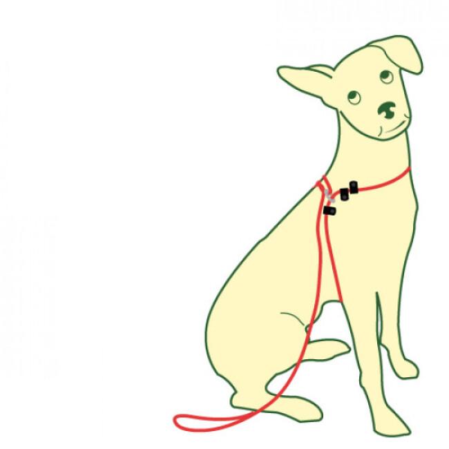 Laisse d'éducation CoolDog pour chien qui tire