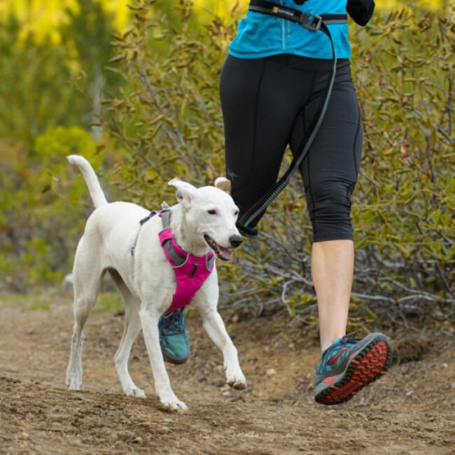 Laisse ceinture extensible Roamer pour chien Ruffwear