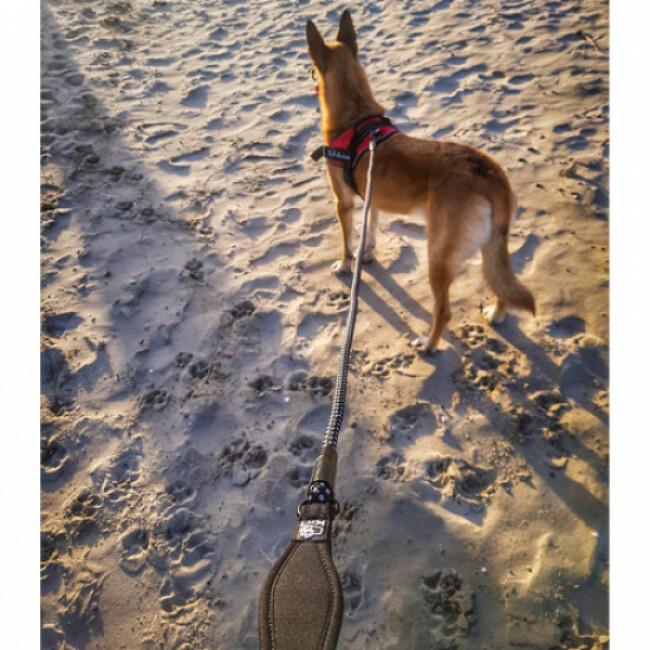 Laisse pour cani-randonnée Kn'1 Style