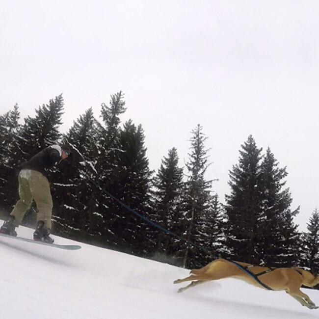 Longe Pullboard pour Cani-Board Kn1 avec chien