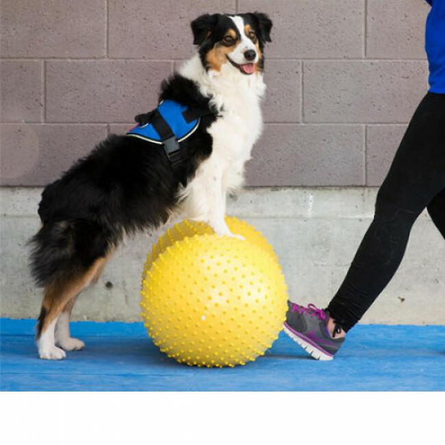 Matériel de renforcement musculaire pour chien FitPaws TRAX Cacahuète