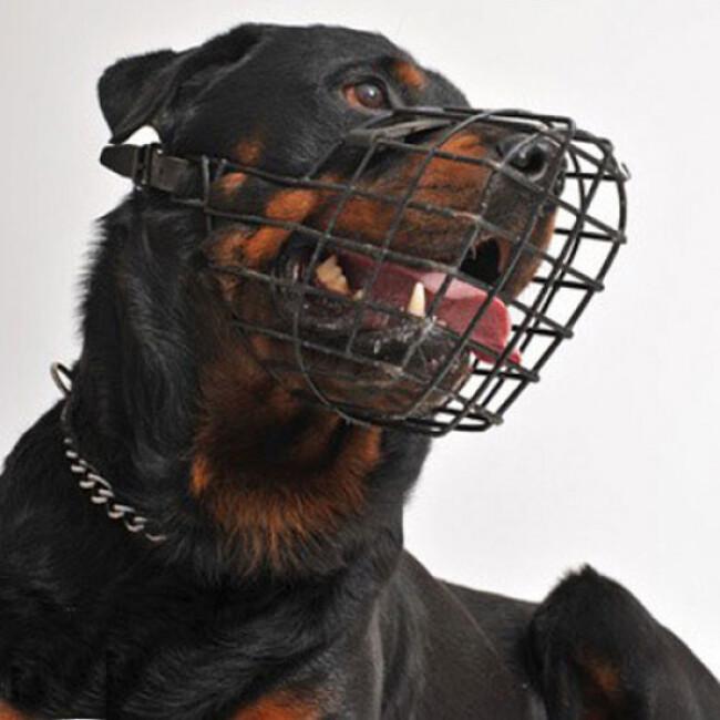 Muselière acier grillage pour chien