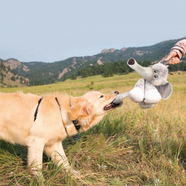 Peluche ours à couinement pour chien KONG Stretchezz Legz