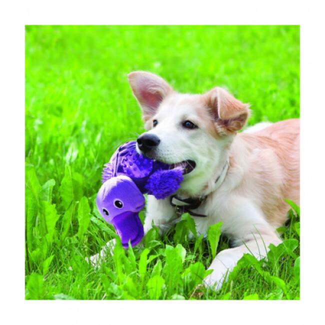 Peluche avec sifflet KONG Shells pour chien