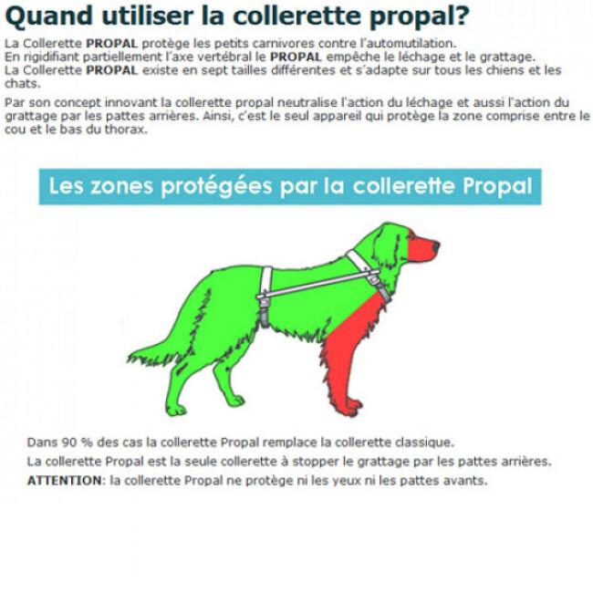 PROPAL antitorsion protection automutilation chien chat