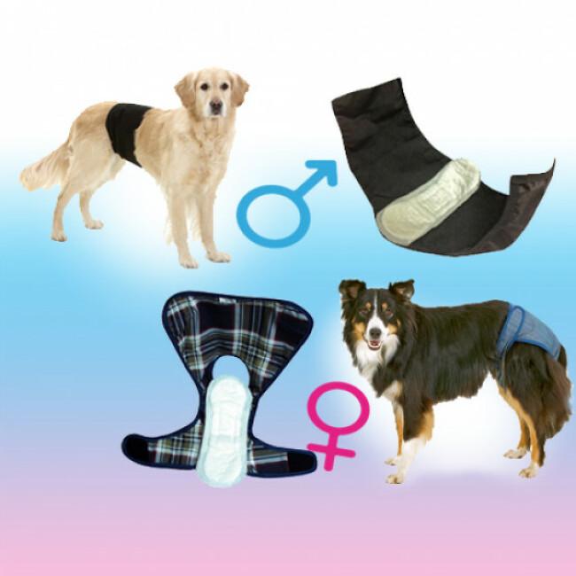 Protection de rechange seule pour slip et culotte d'incontinence de chien et chienne