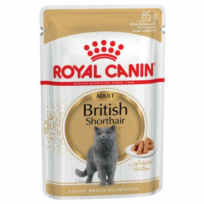 Pâtées pour chat adulte British Shorthair Royal Canin - 12 Sachets 85 g