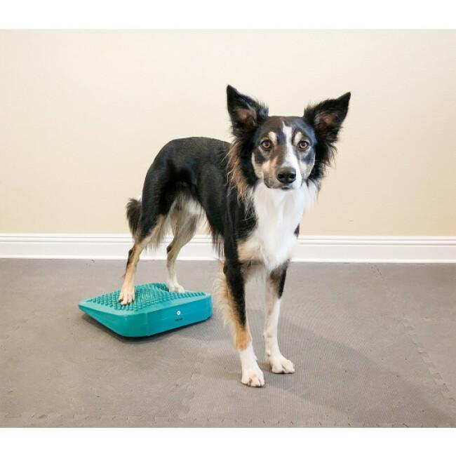 Rampe d'équilibre gonflable pour chien FitPaws The Ramp