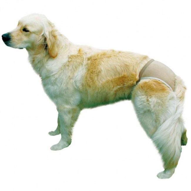 Slip de protection pour chien Trixie Coloris Beige