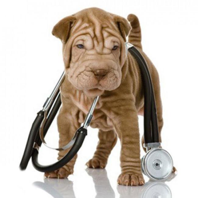 Stéthoscope Rappaport pour chien et chat