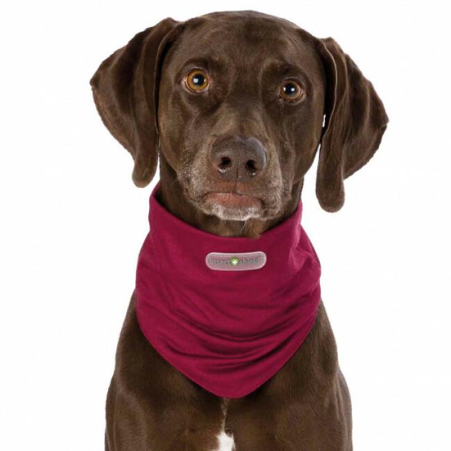 Tour de cou anti-parasitaire pour chien Insect Shield