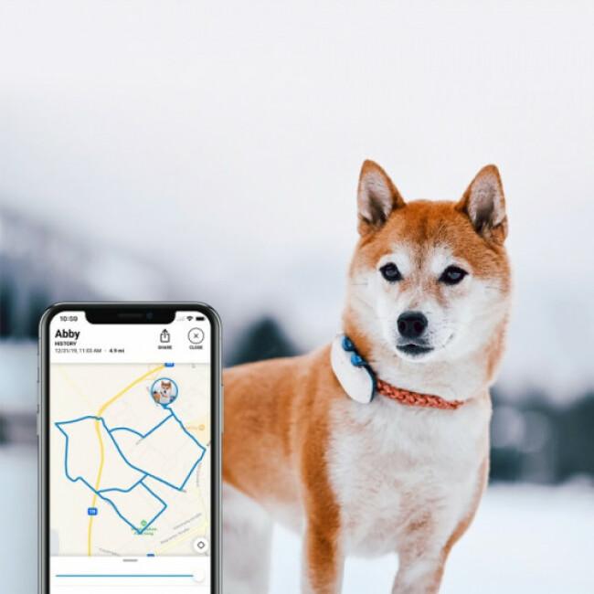 Traceur GPS suivi d'activité Tractive pour chien