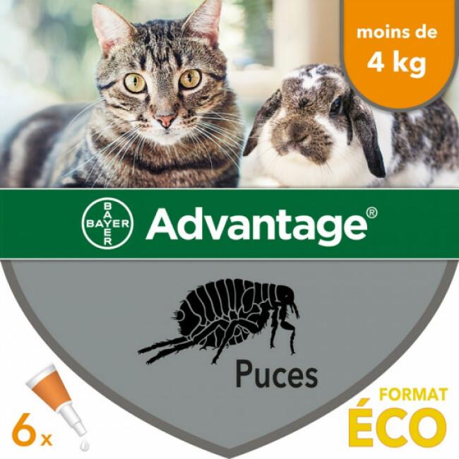 Traitement antiparasitaire pour chats Advantage 40 moins de 4 kg