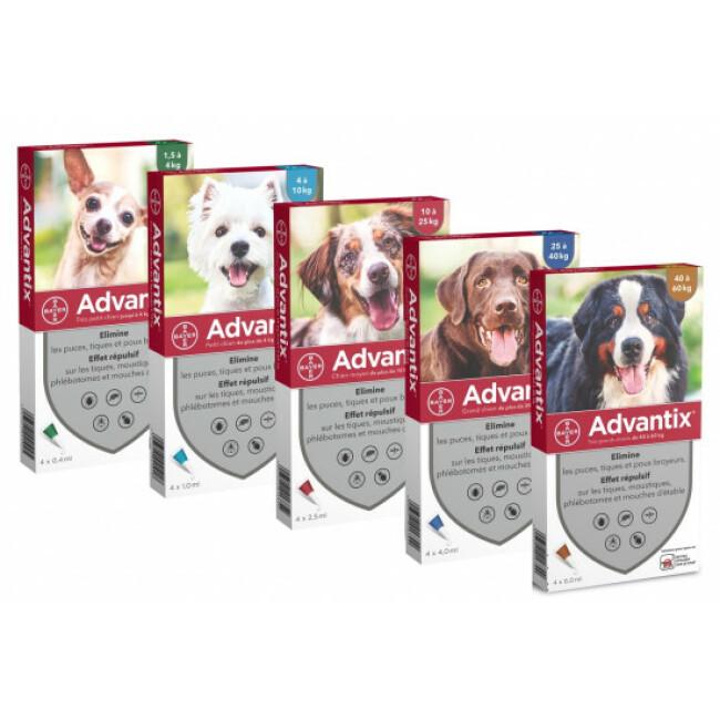 Traitement contre les tiques, puces et poux pour chien Spot On Advantix