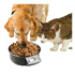 Image 7 - Balance électronique Intelligent Petbowl pour chien et chat