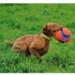Image 2 - Ballon apportable Kick Fetch pour chien