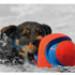 Image 3 - Ballon apportable Kick Fetch pour chien