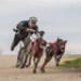 Image 5 - Barre de trait Bike Antenna Non-Stop dogwear pour Bike-Joring