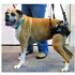 Image 2 - Baudrier de maintien pour chien handicapé Confort Speed