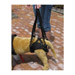 Image 3 - Baudrier de maintien pour chien handicapé Confort Speed