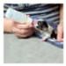 Image 1 - Biberon et tétine pour chiot et chaton