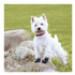 Image 5 - Bottines Kn'1 Grip Active pour protection des coussinets de chien