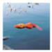 Image 2 - Canard flottant pour chien