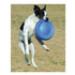 Image 4 - Canifrisbee frisbee Easy Glider en mousse technologique pour chien