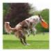 Image 5 - Canifrisbee Frisbee plastique pour chien Dogactivity