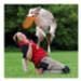 Image 6 - Canifrisbee Frisbee plastique pour chien Dogactivity