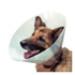 Image 1 - Collerette de protection Carcan pour chien et chat